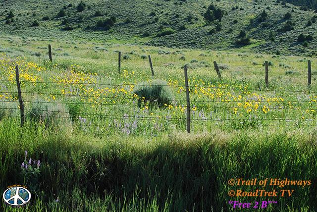 Montana-Backroads-Spring-Birdwatching-Trail of Highways-RoadTrek TV-Social SEO-Organic-Content Marketing-Tom Ski-Skibowski-Photography-Travel-Media-50