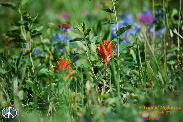 Montana-Backroads-Spring-Birdwatching-Trail of Highways-RoadTrek TV-Social SEO-Organic-Content Marketing-Tom Ski-Skibowski-Photography-Travel-Media-53