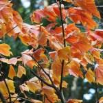 Nakanoto Autumn