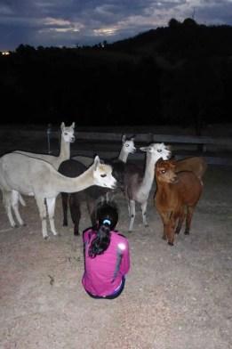 jane mira rai australia with alpaca