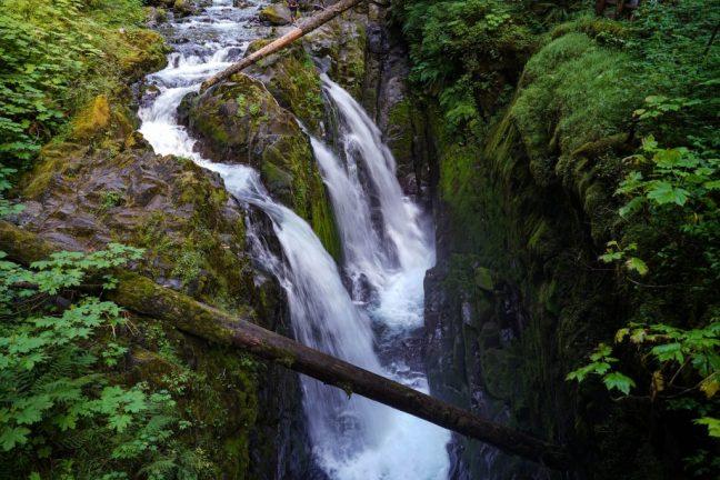 Sol Duc Falls Trail Guide