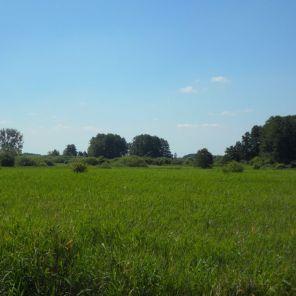 Ein Anblick wie im Havelland