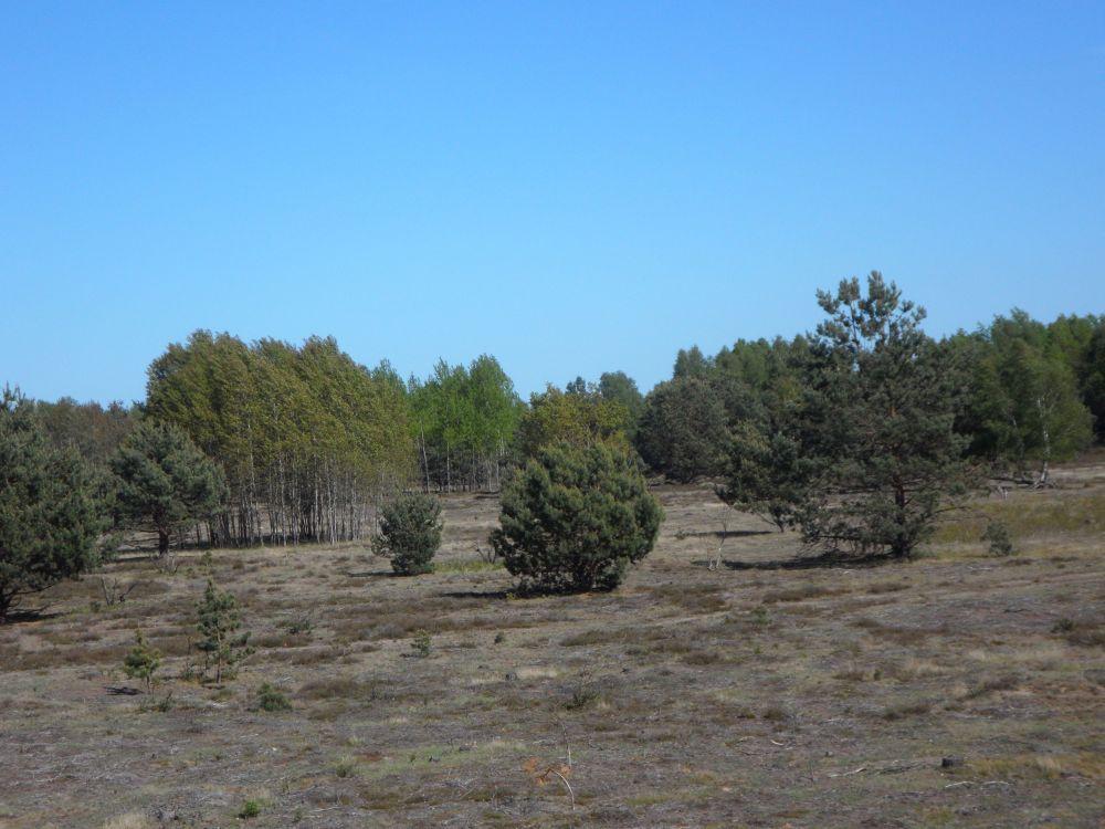 Die Schönower Heide