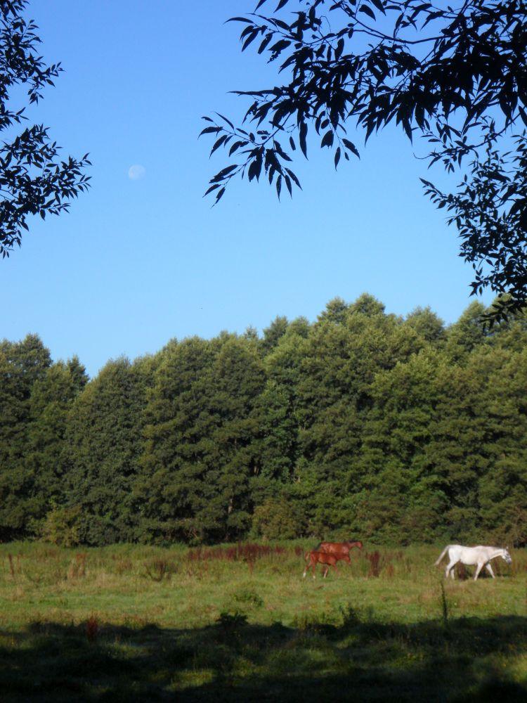 Unter dem Pferdemond