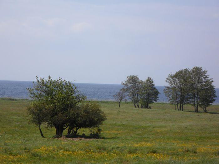 Blick auf den Rügenschen Bodden