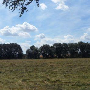 ideales Jagdrevier für Milane