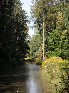Kanal im Spandauer Forst