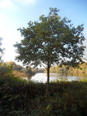 Auf dem Vogelbeobachtungsturm am Lasszinssee