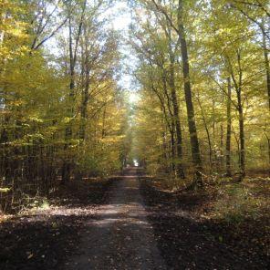 Waldstück in der Neuendorfer Heide