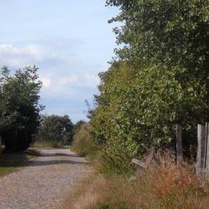 Apfelallee in Flatow