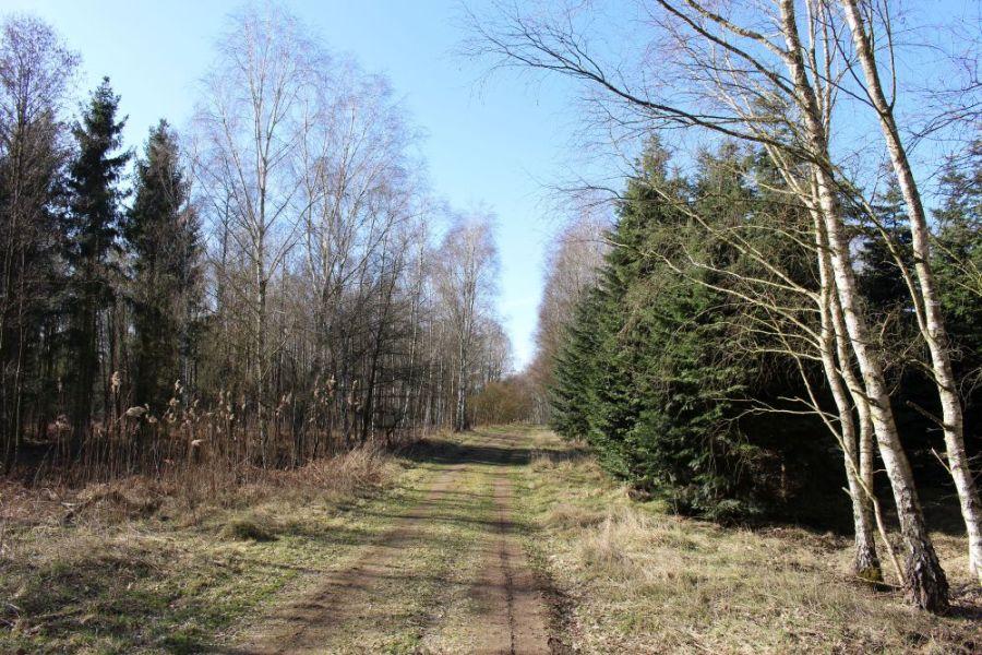 In der Schönwalder Heide