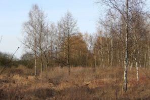 Noch schläft die Heide in der 'Grossen Teufelsbruchwiese'.