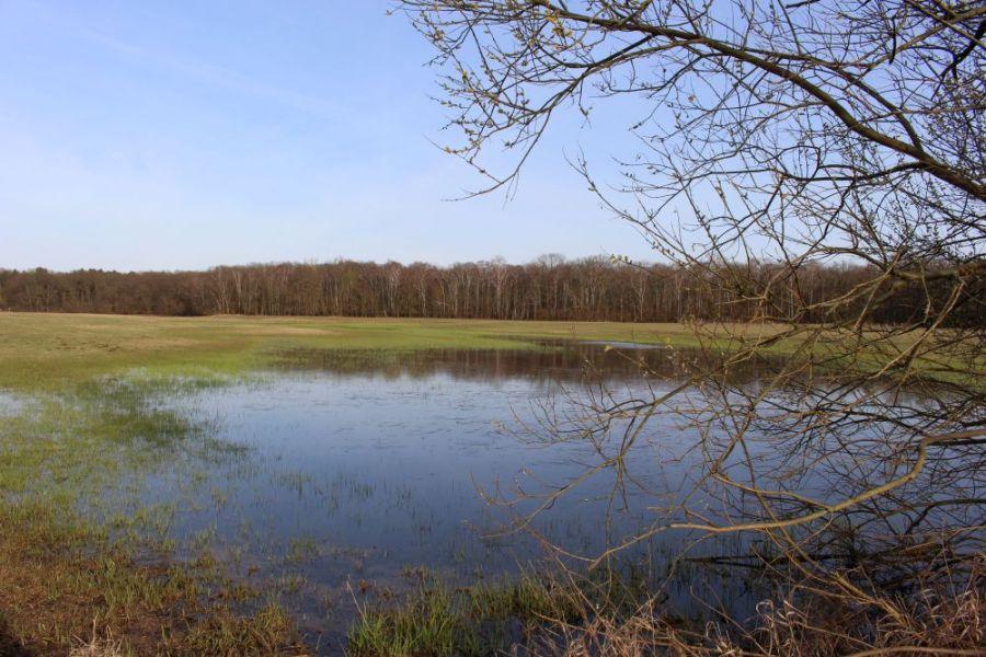 Nein, das ist kein Reisfeld. Nur eine überflutete Wiese im Eiskeller.