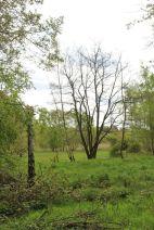 Parklandschaft neben dem Fort Hahneberg