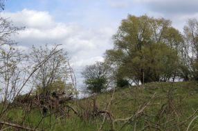 Rekultivierte Deponiefläche am neuen Hahneberg