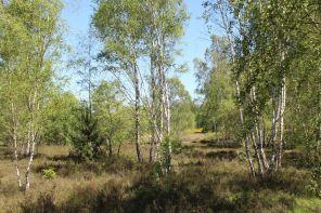 Heidelandschaft wie aus dem Bilderbuch in der Naturerlebnis Ringzone