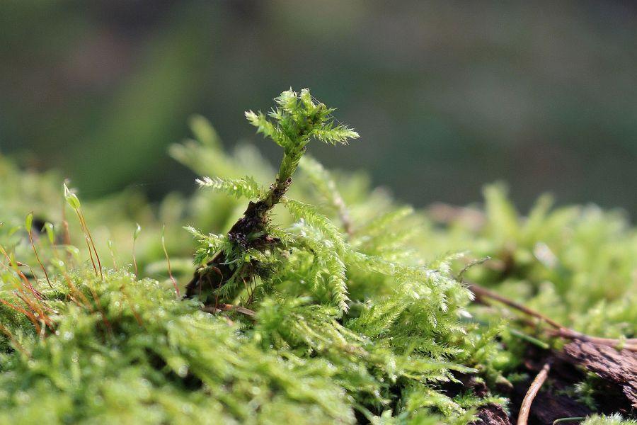 Neues Leben auf Totholz