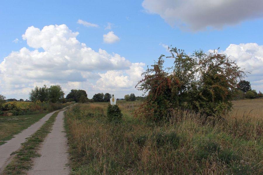 Blick ins Großtrappenschutzgebiet bei Barnewitz. Der Weißdornbusch hängt voll mit seinen roten Beeren.