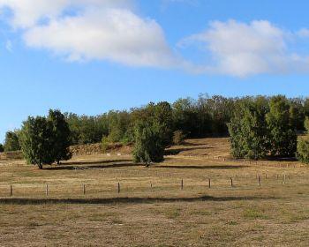 Hinter den Bäumen liegt Fort Hahneberg