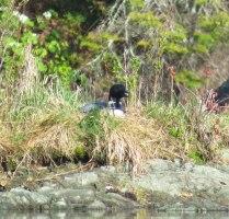 green river may camping 68