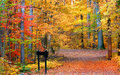 beautiful fall foliage along trail path