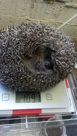 Speedy - a big boy at over 1kg.