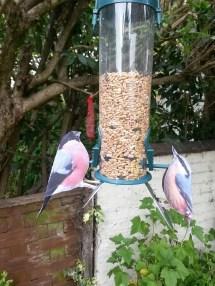 Bully & Nutty on our feeder.