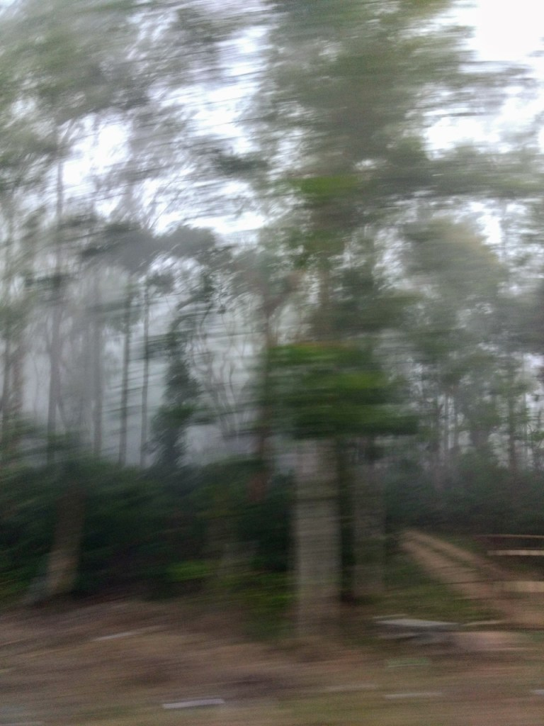 Early Morning Ride From Madikeri Coorg