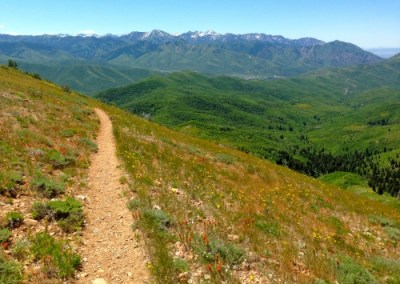 Emigration Canyon Trail Project