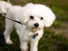 151523269-leash-walking-dogs-632x475