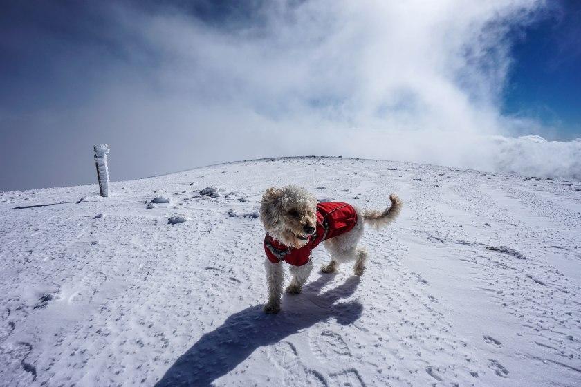 My Little Girl on the Summit
