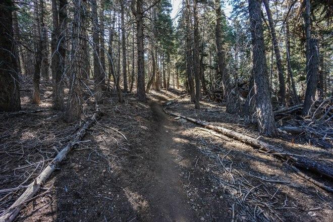 San Bernardino Peak via Angelus Oaks
