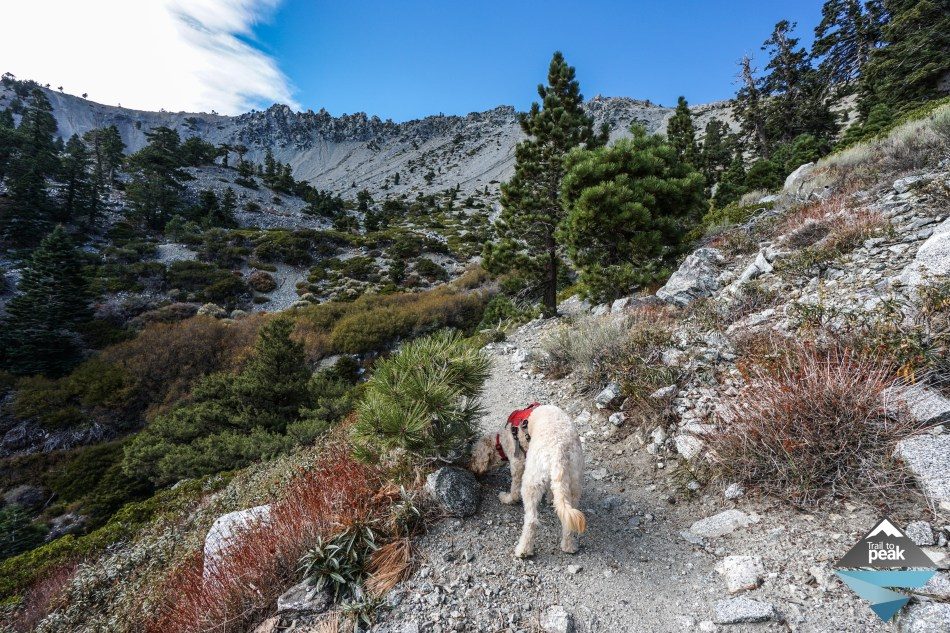 Backpacking Camping Overnight Mt. Baldy via Ski Hut Trail