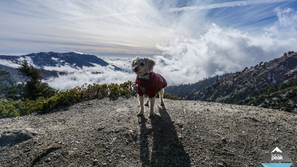 Mt Baldy Winter Hike Hiking December In The Snow With DogsMt Baldy Winter Hike Hiking December In The Snow With Dogs