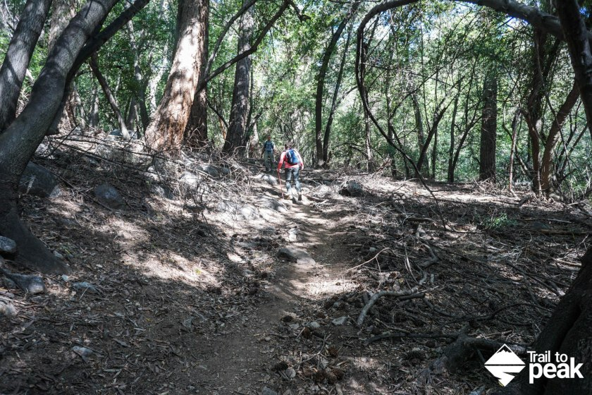 Whether you hiked and returned from Sturtevant Falls or skipped it, hike up the Gabrielindo Trail: