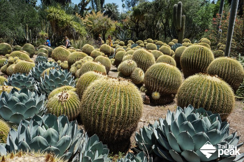 The Huntington Desert Garden
