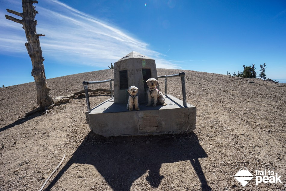 Hiking Mt Baden Powell Via Vincent Gap Hiking Guide With Dogs and Children