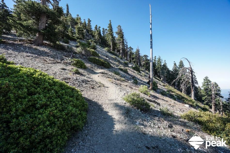 Hiking Cucamonga Peak via Icehouse Canyon Trail