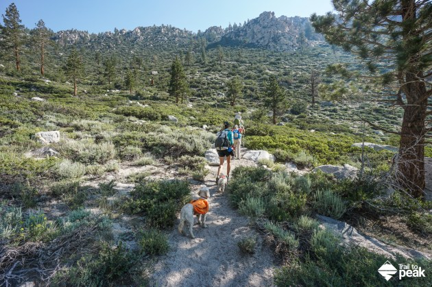 Ruffwear Day Hiking Approach Pack Dogs