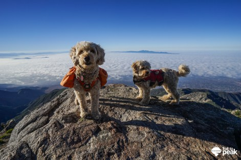 Ruffwear Day Hiking Approach Pack Dogs