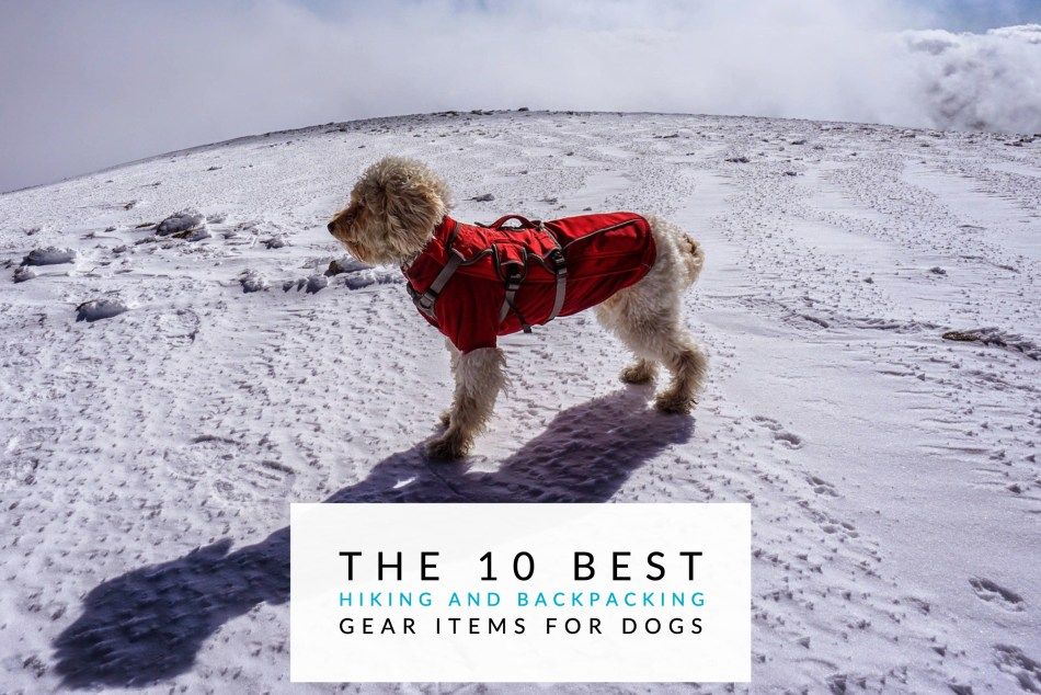 88f37067c4ad2 The 10 Best Hiking and Backpacking Gear Items For Dogs - Trail to Peak