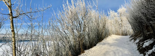 The trails along the river were particularly heavy in frost.