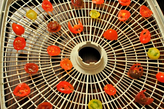 dehydrate tomatoes