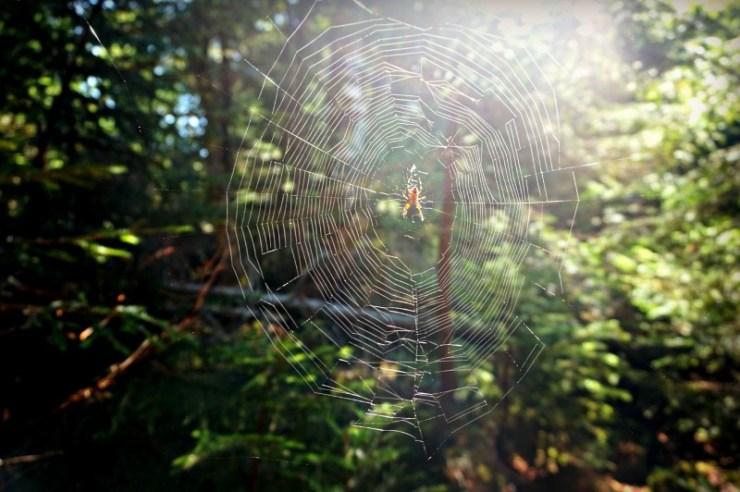 13-spider