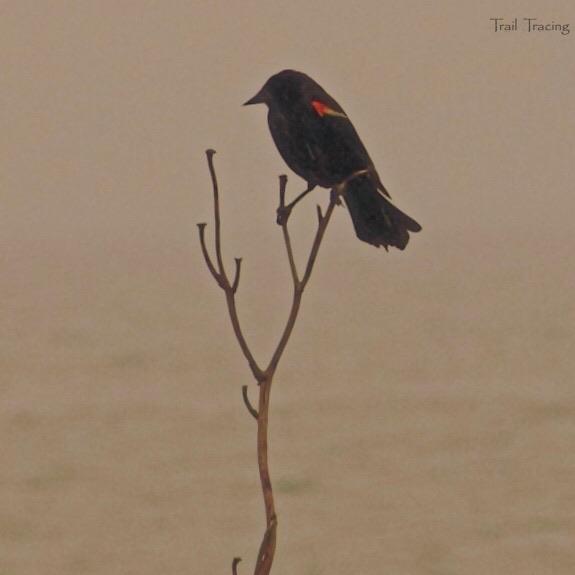 Montrose Point Bird Sanctuary 4 7-22-2018