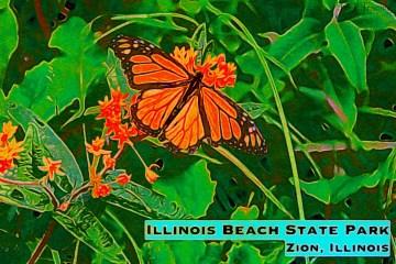 IL Beach Thumbnail