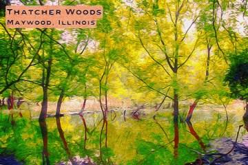 Thatcher Woods Thumbnail