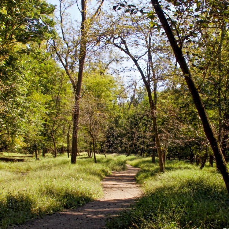 Huppert Woods 2