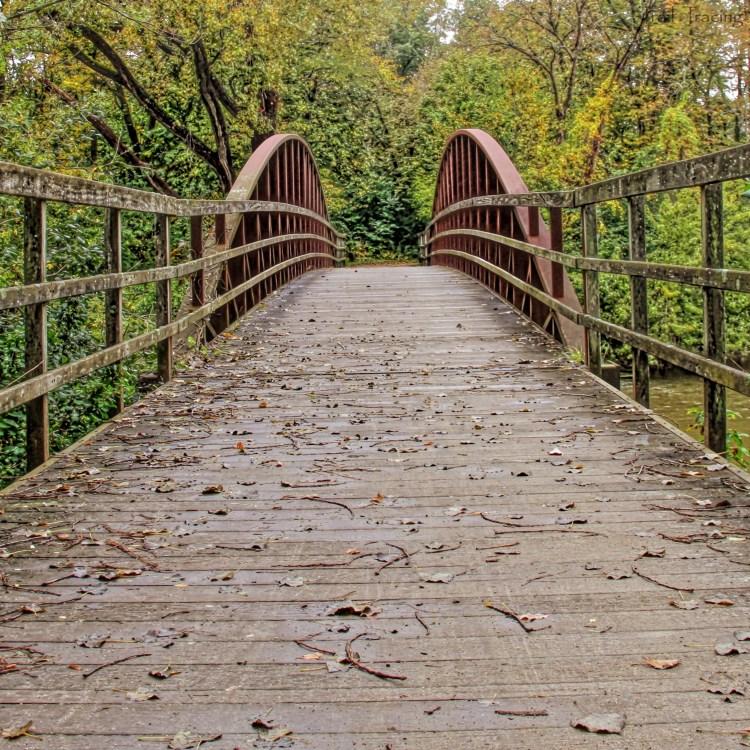 Half Day Bridge