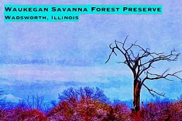 Waukegan Savanna Blog